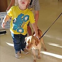 Adopt A Pet :: Butters - Ogden, UT