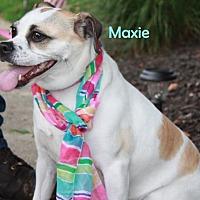 Adopt A Pet :: Maxie - Gibbstown, NJ