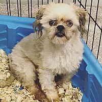 Adopt A Pet :: Teddy - Pompton Lakes, NJ