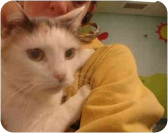 Calico Cat for adoption in Brooklyn, New York - Emily