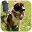 Photo 1 - St. Bernard Mix Puppy for adoption in Murfreesboro, Tennessee - Oliver