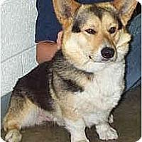 Adopt A Pet :: Joey - Inola, OK