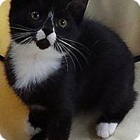 Adopt A Pet :: Victor - Port Republic, MD