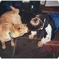 Adopt A Pet :: JuJuBee - Bethesda, MD
