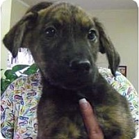 Adopt A Pet :: Luke - FOSTER NEEDED - Seattle, WA