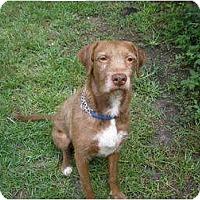 Adopt A Pet :: Rupert - Cantonment, FL