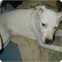 Adopt A Pet :: Ricky - Bakersfield, CA