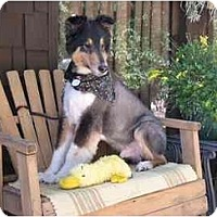 Adopt A Pet :: Bandit - Trabuco Canyon, CA