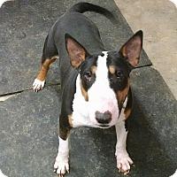 Adopt A Pet :: Rukus - Glenwood, AR