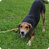 Adopt A Pet :: Eddie - Bakersville, NC