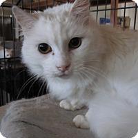 Adopt A Pet :: Blanca - San Ramon, CA