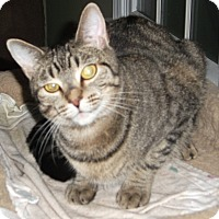 Adopt A Pet :: Suzee - Colmar, PA
