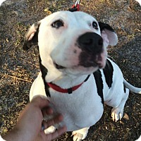 Adopt A Pet :: Nina - Gainesville, FL