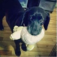 Adopt A Pet :: Daisy Mae - Dallas, TX