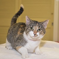 Adopt A Pet :: Cuddles - Medina, OH