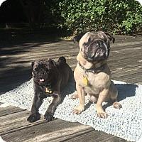 Adopt A Pet :: Geordi - Austin, TX