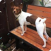 Adopt A Pet :: Tango - Davie, FL