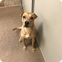 Adopt A Pet :: Chester - Spokane, WA