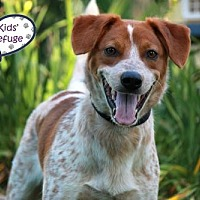Adopt A Pet :: Orange Julius - Lee's Summit, MO