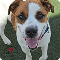 Adopt A Pet :: Dakota - Youngwood, PA