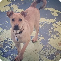 Adopt A Pet :: Winona - Seattle, WA