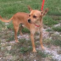 Adopt A Pet :: Rigley - Wichita, KS