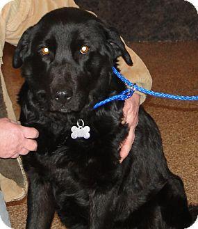 Labrador Retriever Mix Dog for adoption in Columbus, Indiana - Maddie