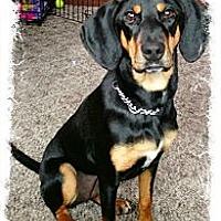 Adopt A Pet :: DJ - Albany, NY