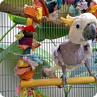 Adopt A Pet :: Mozie - Fountain Valley, CA