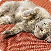 Adopt A Pet :: Cherry - Chicago, IL