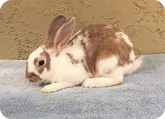 Other/Unknown Mix for adoption in Bonita, California - Gary