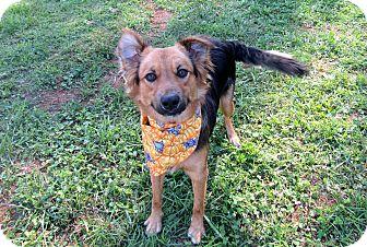Shepherd (Unknown Type) Mix Dog for adoption in Lexington, North Carolina - PEPSI