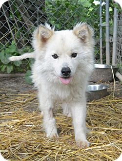Husky Dog for adoption in Afton, New York - Zoey & Shelby