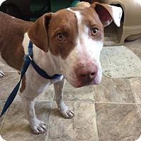 Adopt A Pet :: Spellbinder - Lewisburg, TN