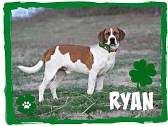 Hound (Unknown Type) Mix Dog for adoption in Marion, Kentucky - Ryan