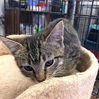 Adopt A Pet :: Peanut - Amarillo, TX