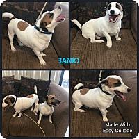 Adopt A Pet :: Banjo - Garden City, MI