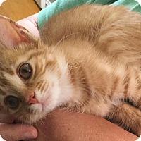 Adopt A Pet :: Emily Hope - Windsor, CT
