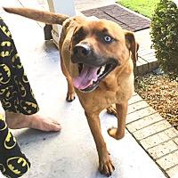 Adopt A Pet :: Aurora - Manhasset, NY