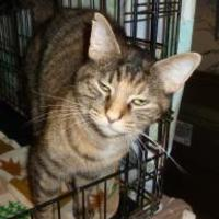 Adopt A Pet :: Scooter - Westville, IN
