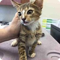 Adopt A Pet :: A443094 - San Antonio, TX