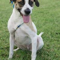 Adopt A Pet :: Waverly - Memphis, TN