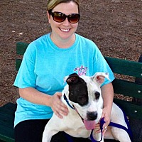 Adopt A Pet :: Dee Dee - Decatur, GA