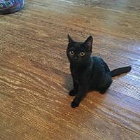 Adopt A Pet :: GEORGETTE - Bridgewater, NJ