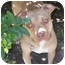 Photo 1 - Terrier (Unknown Type, Medium)/Labrador Retriever Mix Dog for adoption in Kingwood, Texas - Hudson