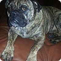 Adopt A Pet :: Willow(ADOPTED!) - Chicago, IL