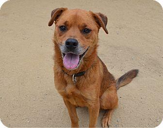 Shepherd (Unknown Type)/Labrador Retriever Mix Dog for adoption in Los Angeles, California - Jenna