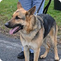 Adopt A Pet :: Clyde - ROME, NY