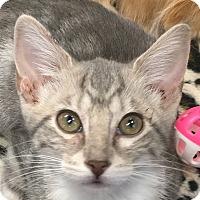Adopt A Pet :: Korrie - Winchester, CA