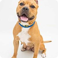 Adopt A Pet :: Hazel - Reisterstown, MD